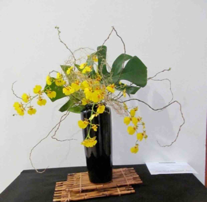 Oncidium, 'arrangement'