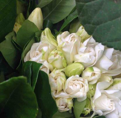 Jasmine, Flower bouquet