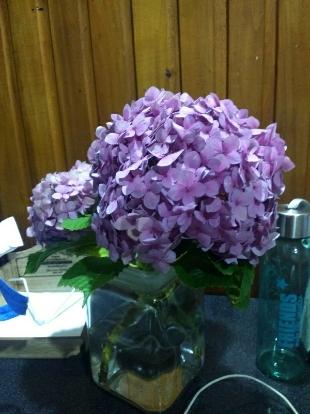 Hydrangea, Hydrangeaceae, Cornales, Lilac