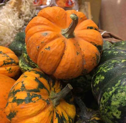 Pumpkin, Curcuvita