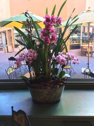 Flower bouquet, Orchid