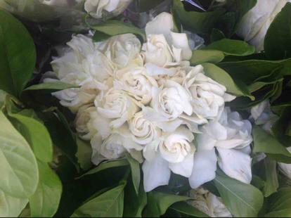 Gardenia jasminoides, 'Flower bouquet'