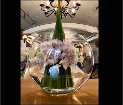 Phalaenopsis, 'flower bouquet'