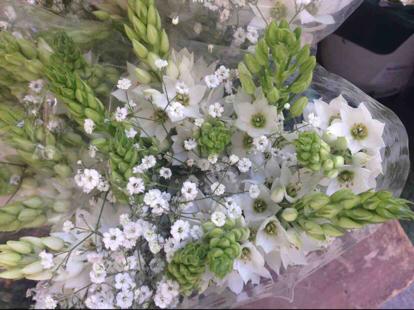 Ornithogalum thyrsoides, Flower bouquet