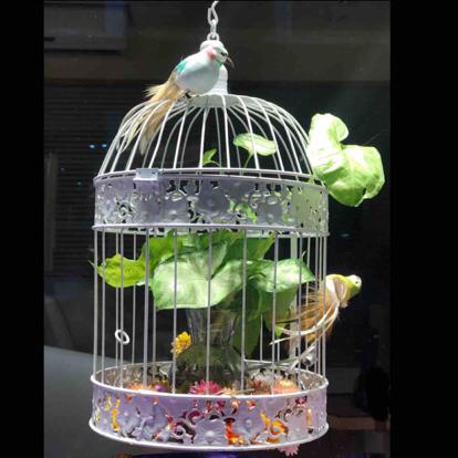 Syngonium, 'Flower arrangement'