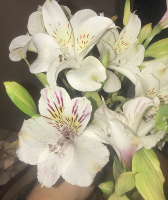 Alstroemeria, Flower bouquet