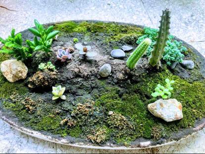 Suculent plant, tray landscape