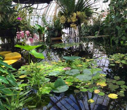 Aquatic pond