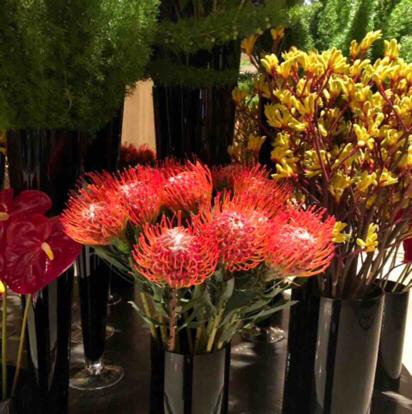 Protea  paradise