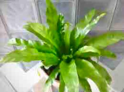 flower, Fern, vascular plant, terrestrial plant
