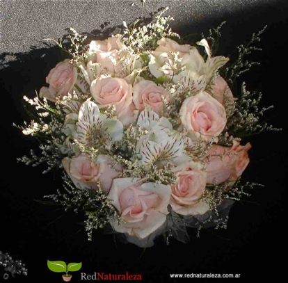 flower, Rose, garden roses, rose family