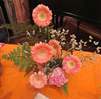 flower, gerbera, barberton daisy