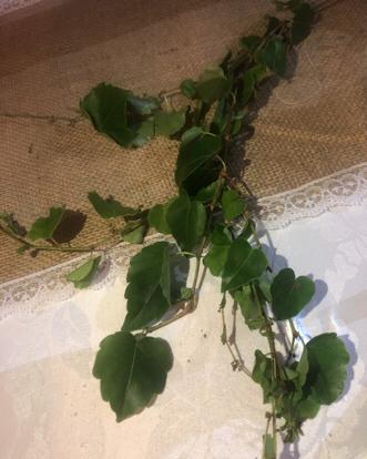 flower, Ivy