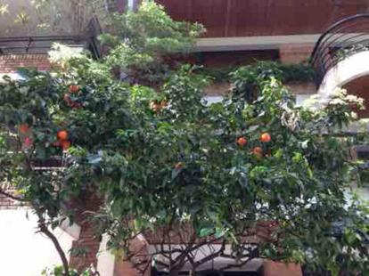 Citrus aurantium, var. amara L.
